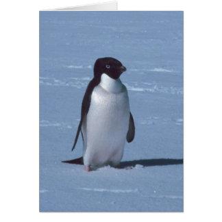 Lone pingvin i insnöad snö hälsningskort