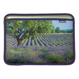 Lone träd i purpurfärgat fält av lavendel MacBook sleeve