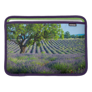 Lone träd i purpurfärgat fält av lavendel sleeve för MacBook air