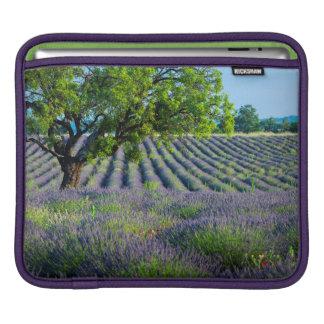 Lone träd i purpurfärgat fält av lavendel sleeves för iPads