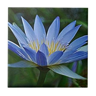 Lotusblommablomma och menande kakelplatta