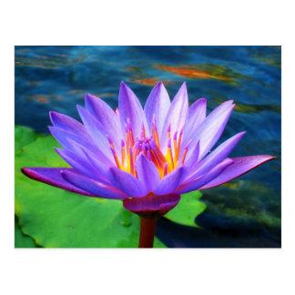Lotusblommablomma Vykort