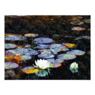 Lotusblommahjärtor Fototryck