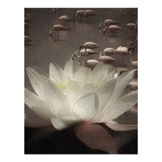 Lotusblommameditation Brevhuvud