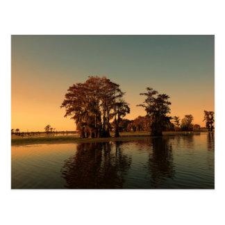 Louisiana flodarm- och cypressträd på solnedgången vykort