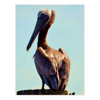 Louisiana pelikan vykort