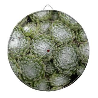 Löv av en cobwebhusleek, Sempervivum arachno Darttavla