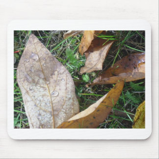 löv musmatta