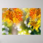 Löv på grenarna i höstskogen print