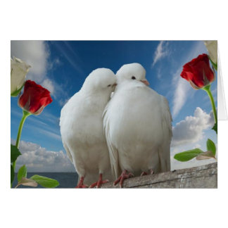 Love birds hälsningskort