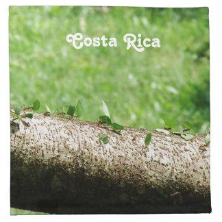 Lövskäraremyror i Costa Rica Tygservett