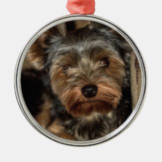 Luddig ansikteYorkshire Terrier Julgransprydnad Metall