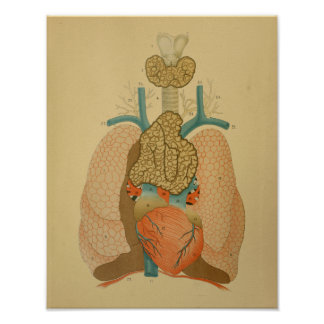 Lungs 1879 för hjärta för vintageanatomitryck poster