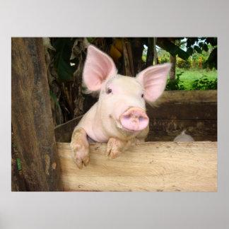 Lycklig gris poster
