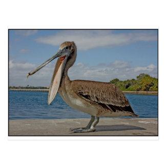 Lycklig pelikan vykort