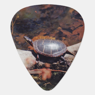 Lycklig sköldpadda plektrum