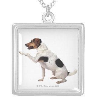 Lyftande tass för jackRussell Terrier Silverpläterat Halsband