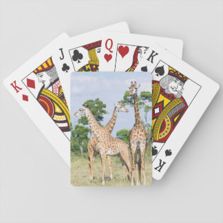 Maasai giraff casinokort