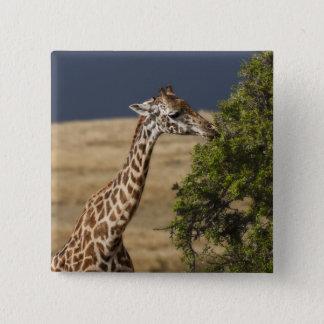 Maasai giraff (giraffet Tippelskirchi) som sedda 2 Standard Kanpp Fyrkantig 5.1 Cm