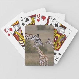 Maasai giraff (giraffet Tippelskirchi) som sett Casinokort