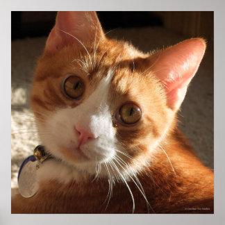 Mac-kattfotoet kvadrerar kanvastrycket poster