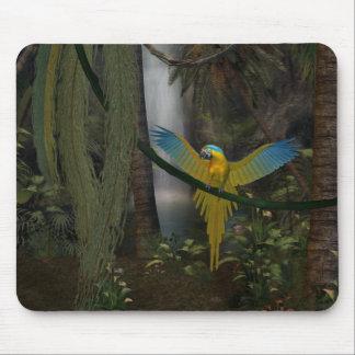Macaw Musmatta