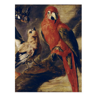 Macaw och domherre vykort
