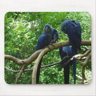 Macawfåglar Mousepad Musmatta