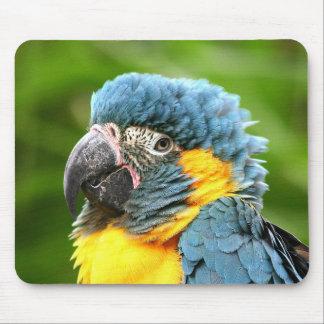 Macawmousepad Musmatta