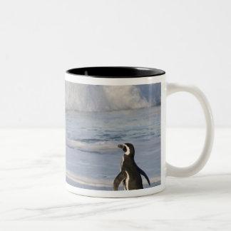 Magellanic pingvin, spheniscusmagellanicus, Två-Tonad mugg