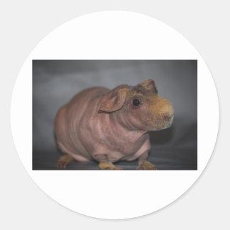 Mager gris runt klistermärke