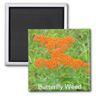 Magnet för fjärilsogräs