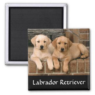 Magnet för kyl för valpar för Labrador Retriever