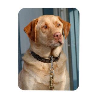 Magnet för Labrador Retriever