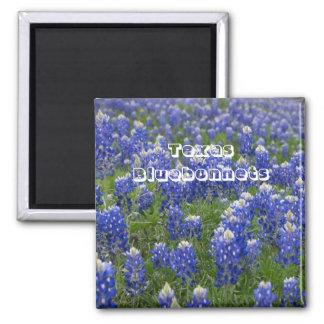 Magnet för Texas statlig blommaBluebonnets