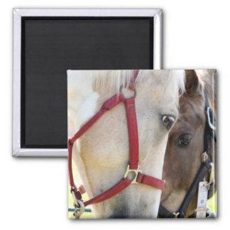 Magnet för två hästar