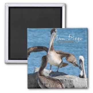 Magneter för San Diego Kalifornien pelikankyl