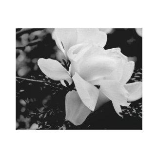 Magnolia Canvastryck
