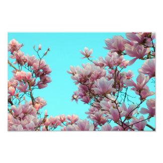 Magnolia Fototryck