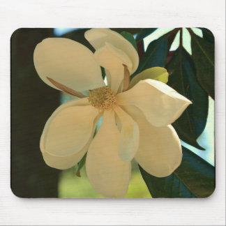 Magnolia (Mississippi och Louisiana) Musmatta