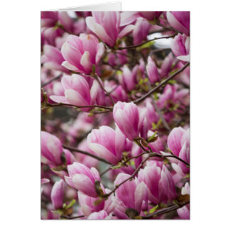 magnolia som blommar på träd hälsningskort