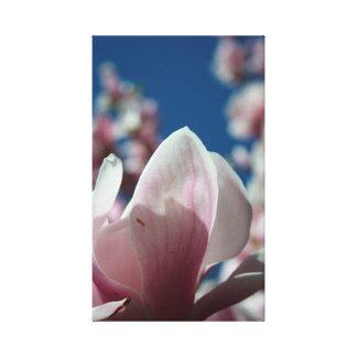 Magnolia - vår - blom- fotografi - kanfas 2 canvastryck