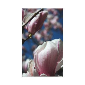 Magnolia - vår - blom- fotografi - kanfas 3 canvastryck