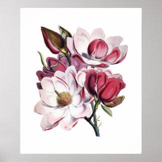 Magnoliaaffisch Poster
