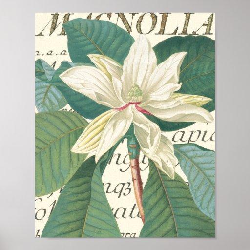 Magnoliaen med calligraphic specificerar affischer