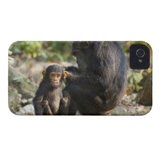 Mahale berg nationalpark, Tanzania iPhone 4 Skal