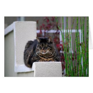 Maine Coonkatt i trädgårds- hälsningkort Hälsningskort