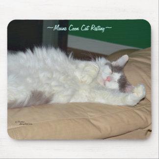 Maine Coonkatt som sovar Mousepad Musmatta