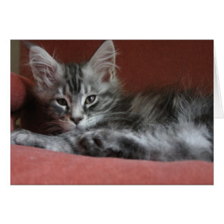 Maine Coonkattunge, en sömnig ung kissekatt Hälsningskort