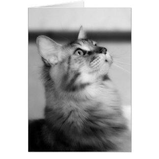 Maine Coonkattunge - svartvitt porträtt Hälsningskort